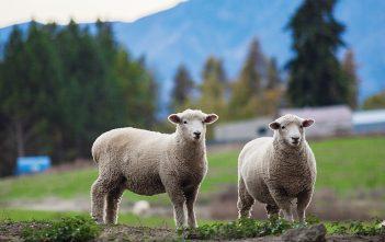 Farming Sector - Erin Burke